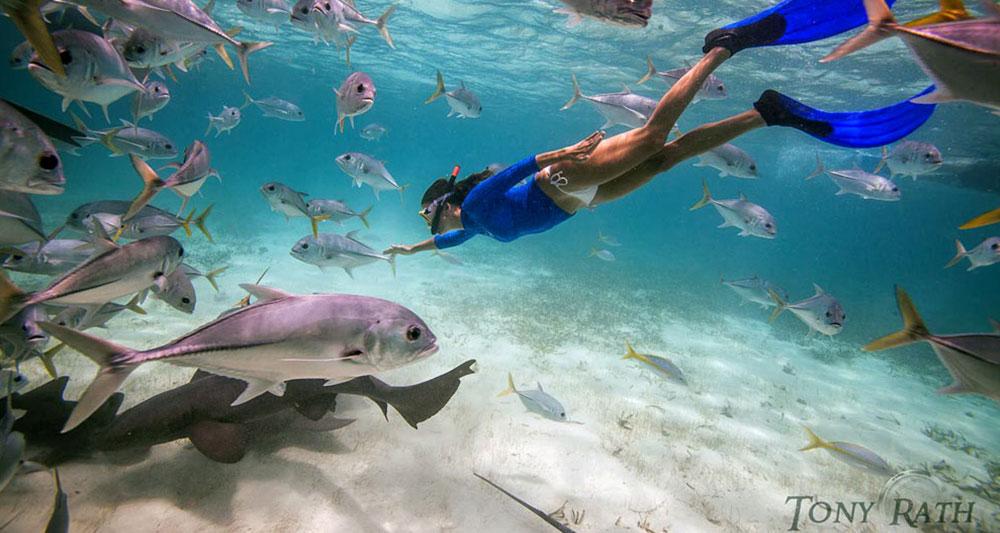 Best marine reserves in Latin America