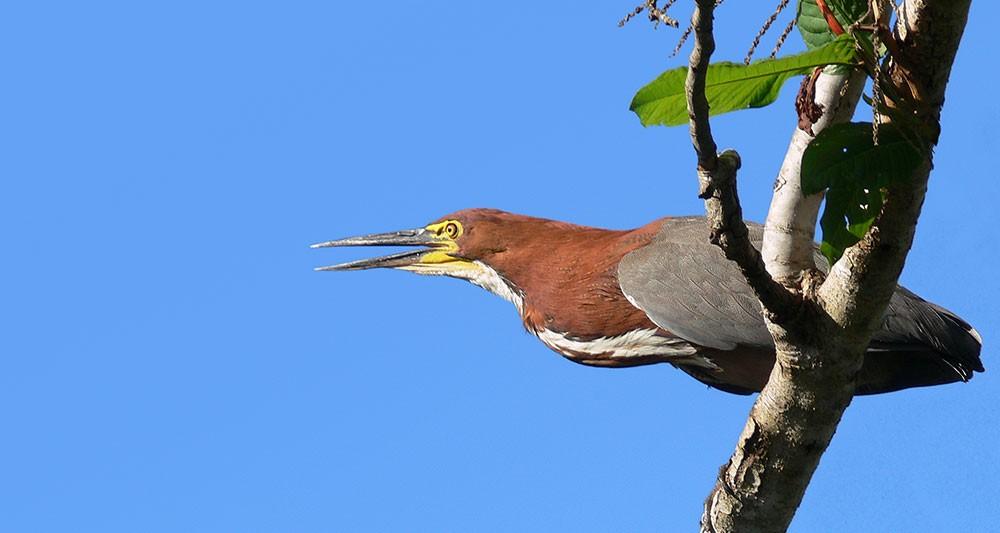argentina-birding-tour