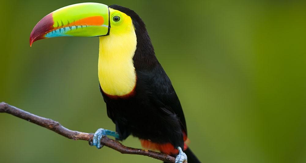 belize-birding-tour