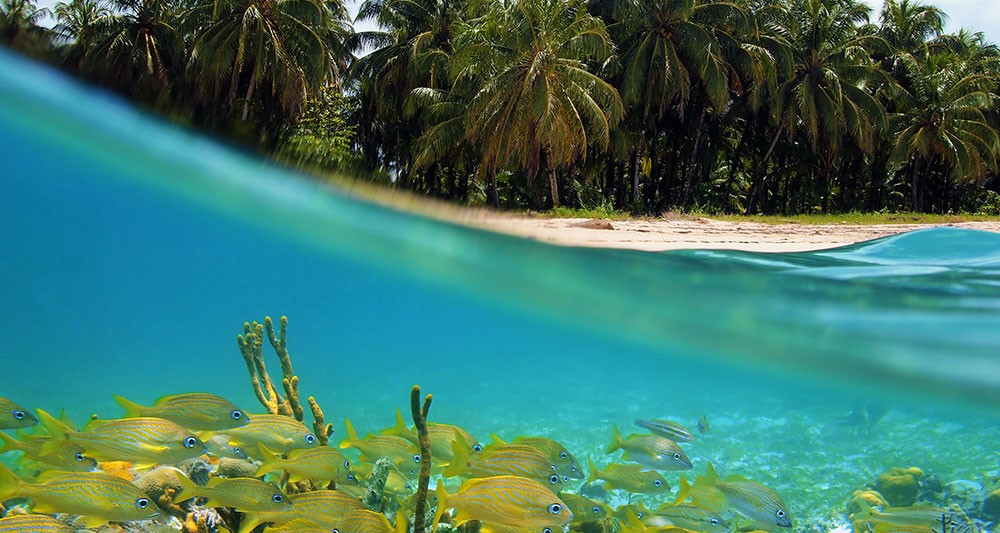 Favorite SCUBA and Snorkel Spots