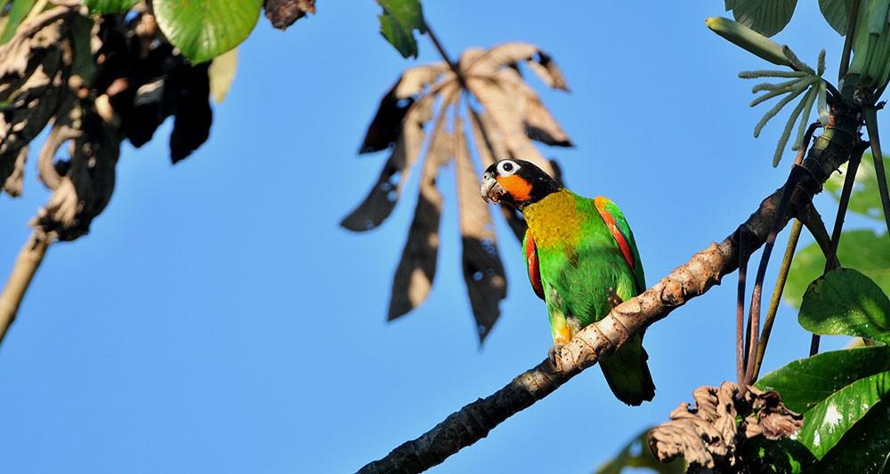 brazil-birding-tour