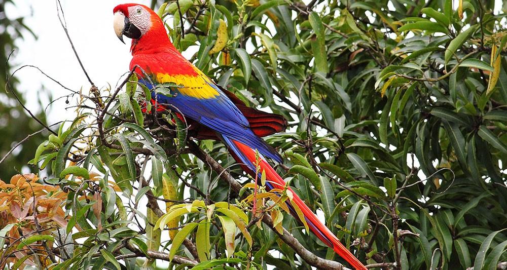 costa-rica-birding-tour