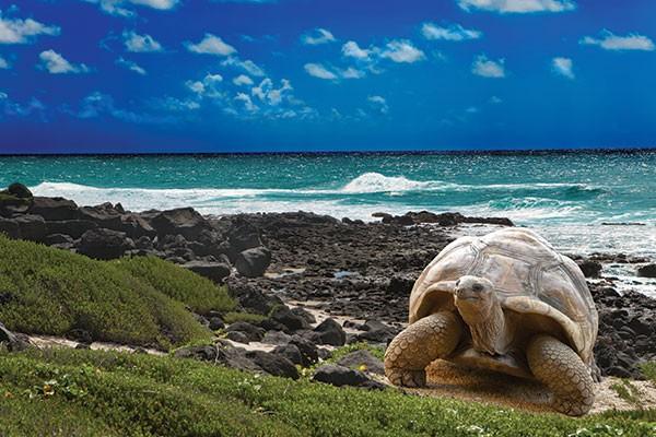 La Pinta Galapagos