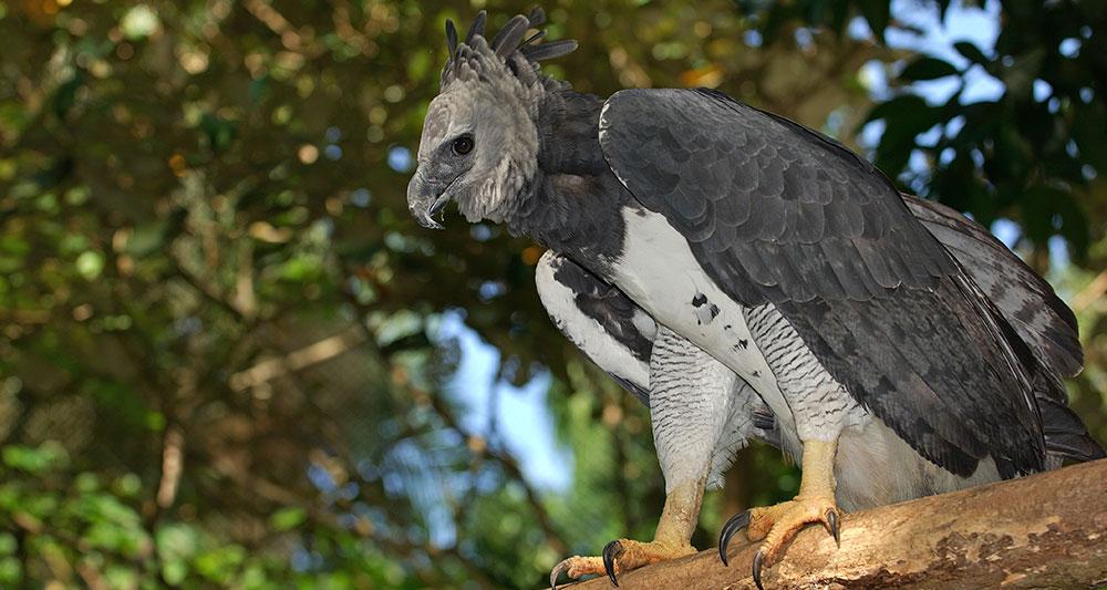 panama-birding-tour