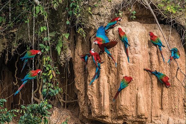 peru amazon travel
