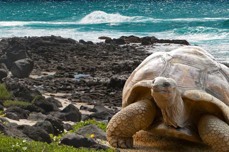 Luxury Galapagos Yachts Available for Christmas